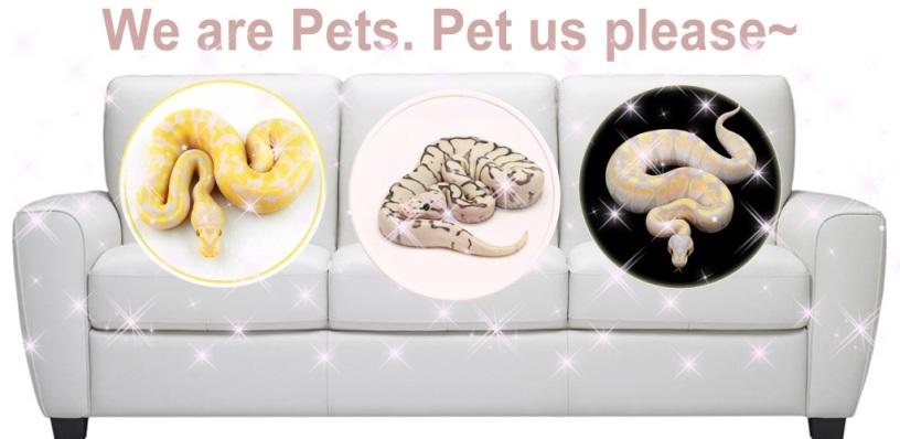 Pet Python Wallpaper HD