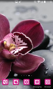Orchid Flower Wallpaper Hd Amazing Wallpapers Themes
